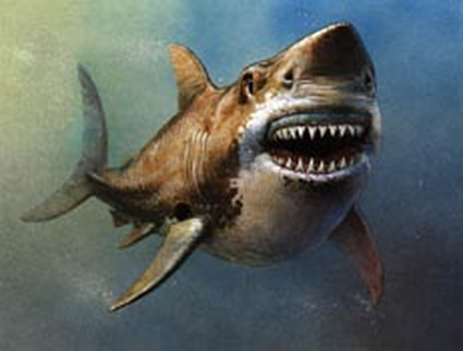 Shark, nature illustration by Walter Stuart.